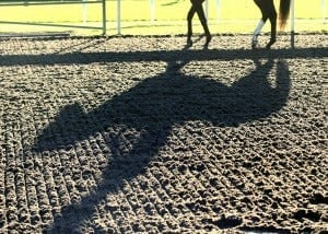 Horse deaths could be lessened with artificial racetracks