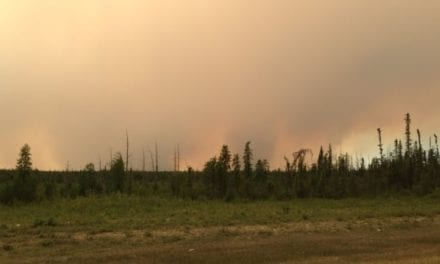 Boreal warning: Climate change could make Canada's forest a carbon emitter   CBC News