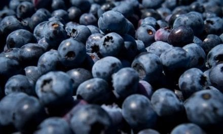 B.C. court decreases price of blueberry farm after former owners poison crop