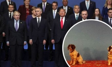Gloucestershire police dogs sent to NATO summit to protect world leaders including Donald Trump and Boris Johnson – Gloucestershire Live