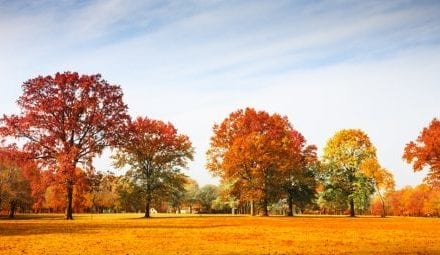 The Weather Network releases Canada's fall forecast and winter preview