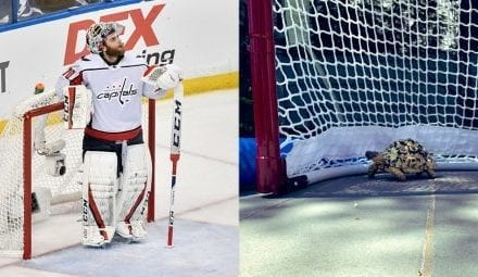Vancouver Canucks goalie Holtby got his pet turtles into Canada