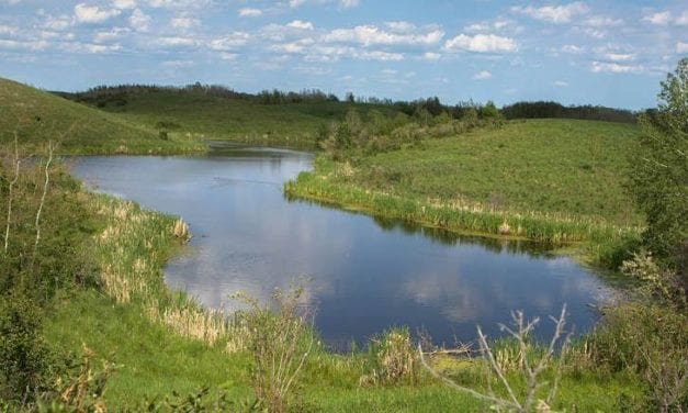 Letter: Saving wetlands is a resolution Canada must keep – Morinville News – Morinville Online