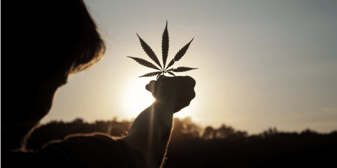 What You Need To Know About Online Dispensaries in Canada